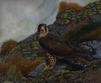 PEREGRINE FALCONS by Gerard M King  at Dolan's Art Auction House